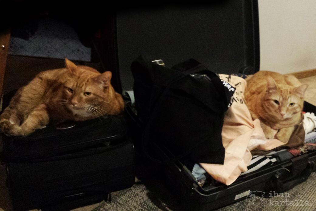 kissat-matkalaukut.jpg