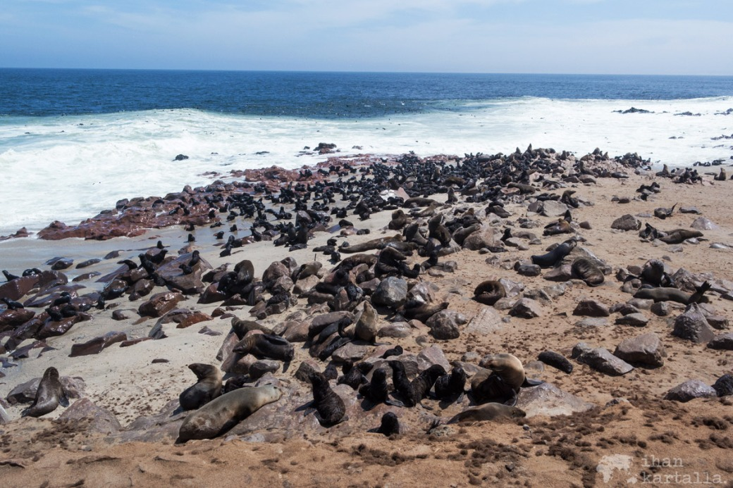 cape-cross-fur-seals.jpg