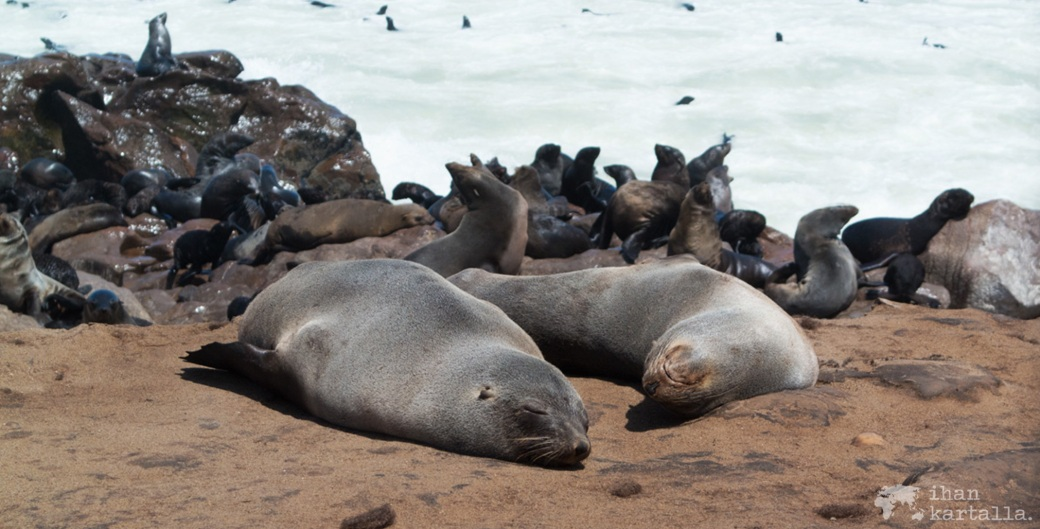 cape-cross-seal-reserve-banneri