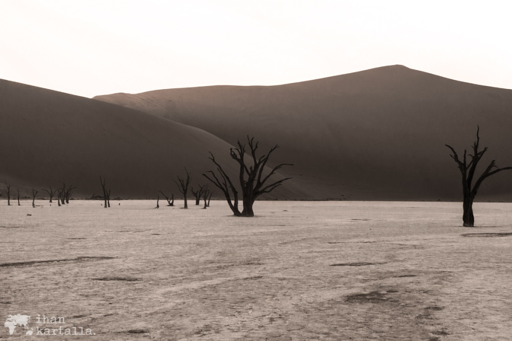 deadvlei-trees