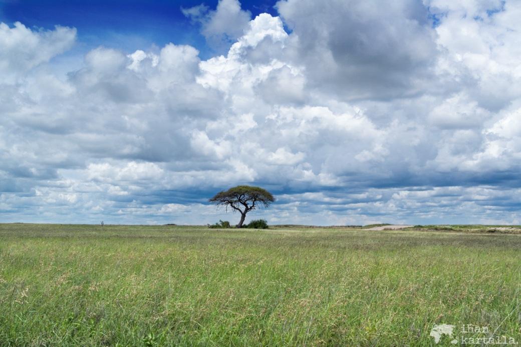 namibia-halali-savanni