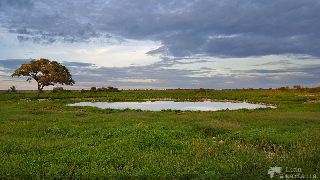 namibia-okaukuejo-waterhole
