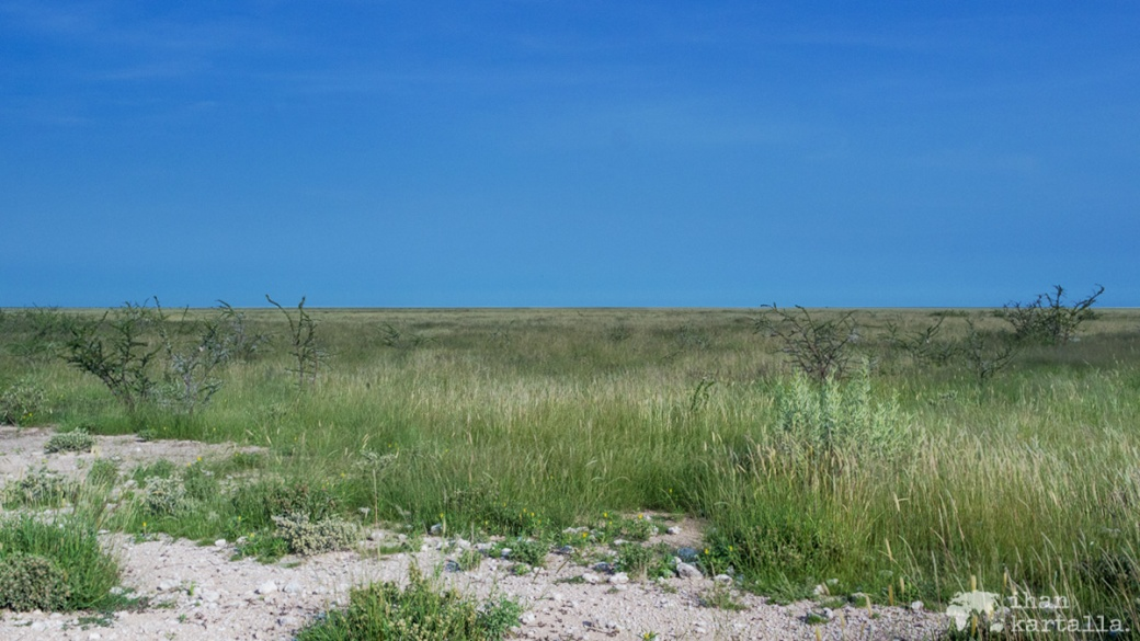swakopmund-etosha-savanni.jpg