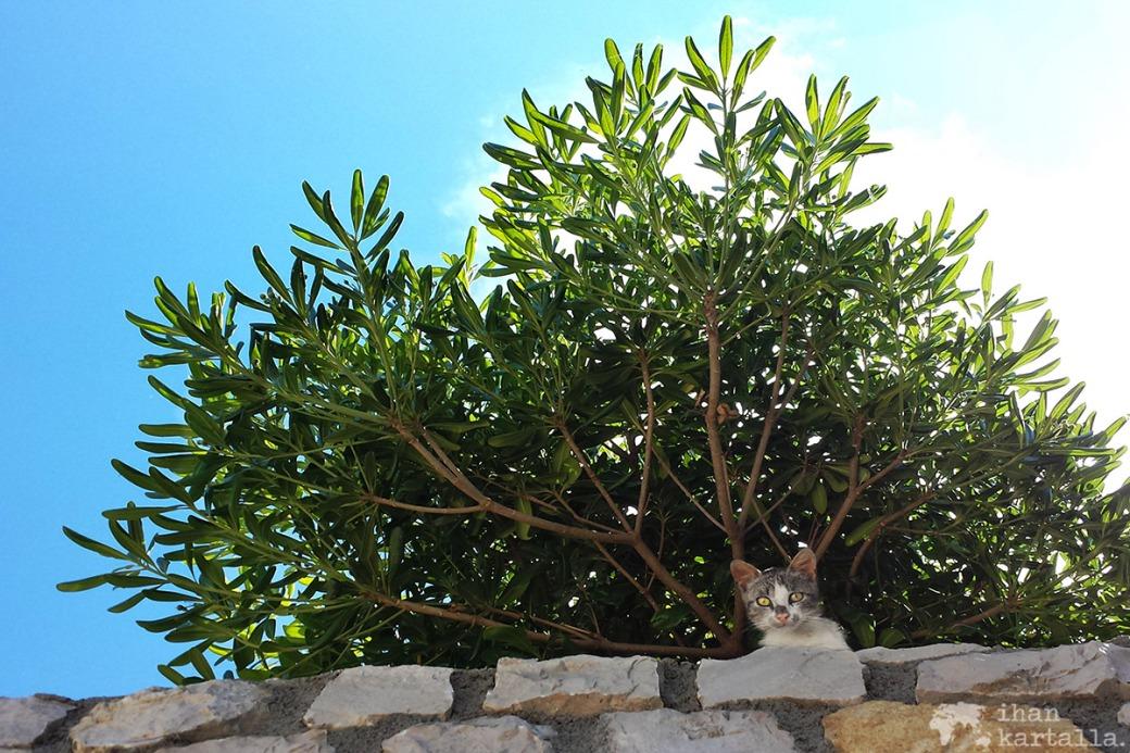 5-6-montenegro-ulcinj-kissa