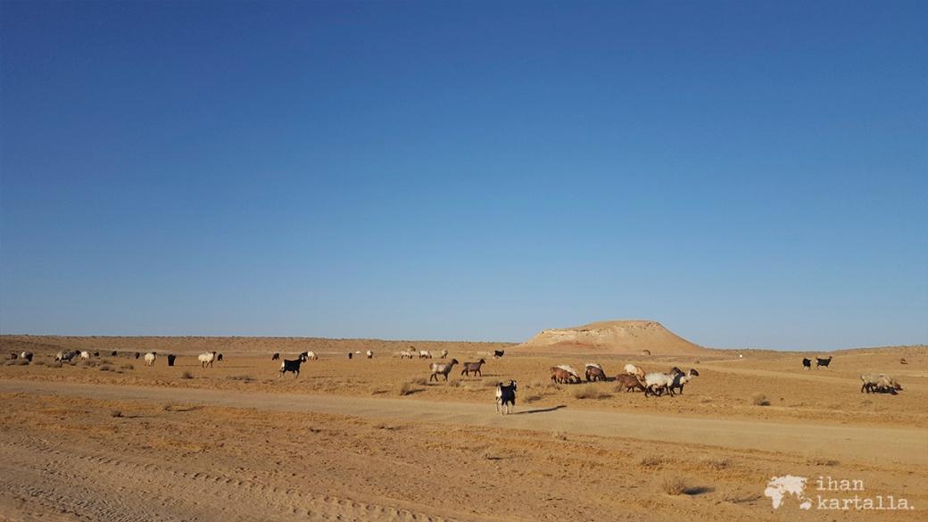 3-7 turkmenistan darvaza lampaat