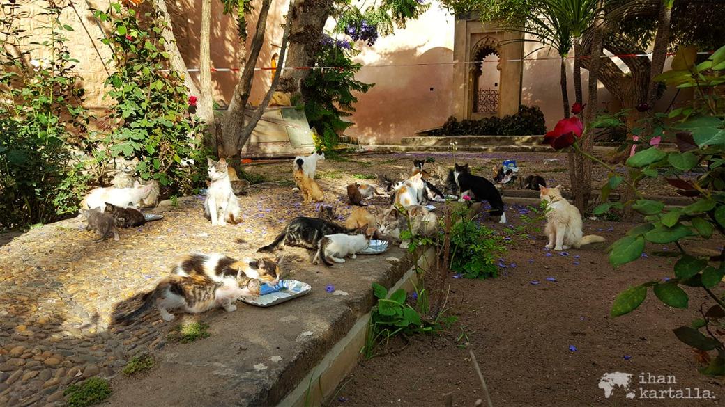 31-5 rabat medina kissat