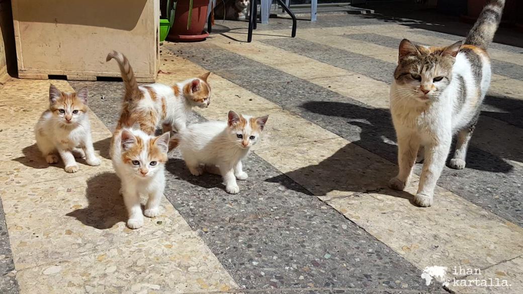 31-3-jordan-amman-cats