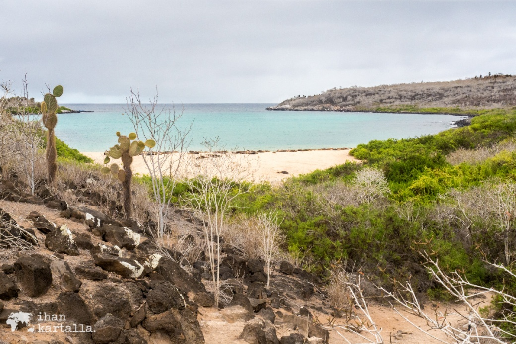10-9-galapagos-santa-fe-beach