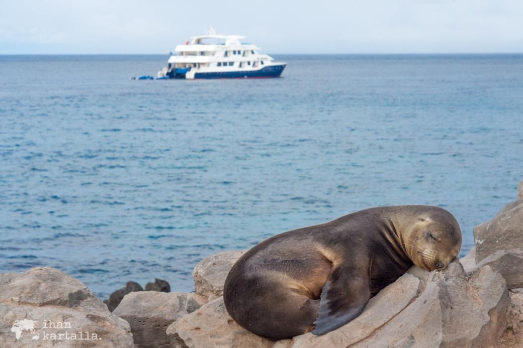 10-9-galapagos-santa-fe-cormorat-sea-lion