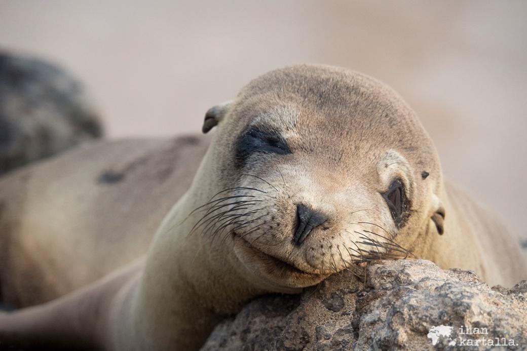 10-9-galapagos-santa-fe-sleeping