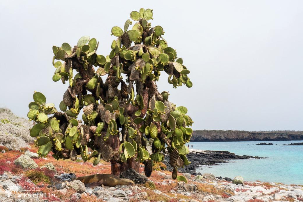 10-9-galapagos-south-plaza-under-cactus