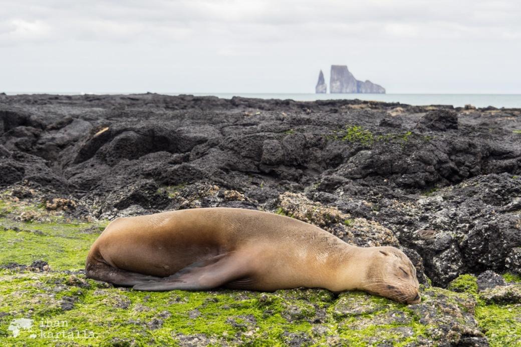 11-9-galapagos-cerro-brujo-sea-lion