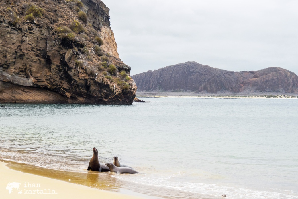11-9-galapagos-punta-pitt-beach