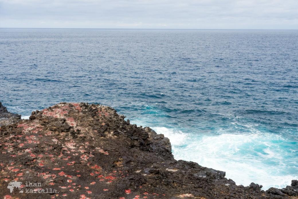 11-9-galapagos-punta-pitt-cliff