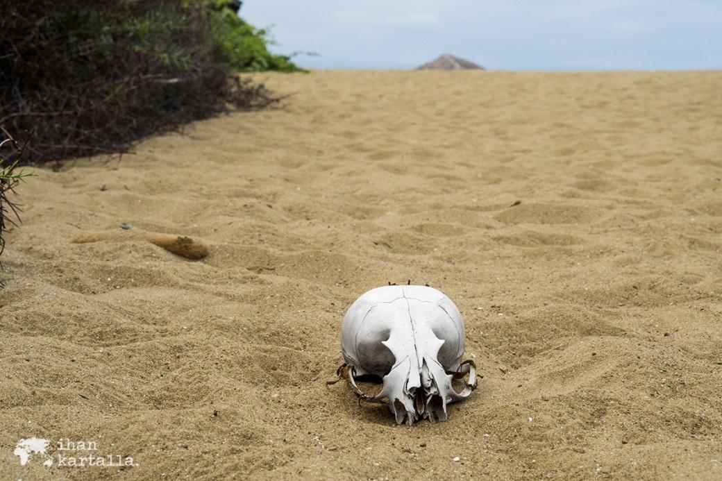 11-9-galapagos-punta-pitt-skull
