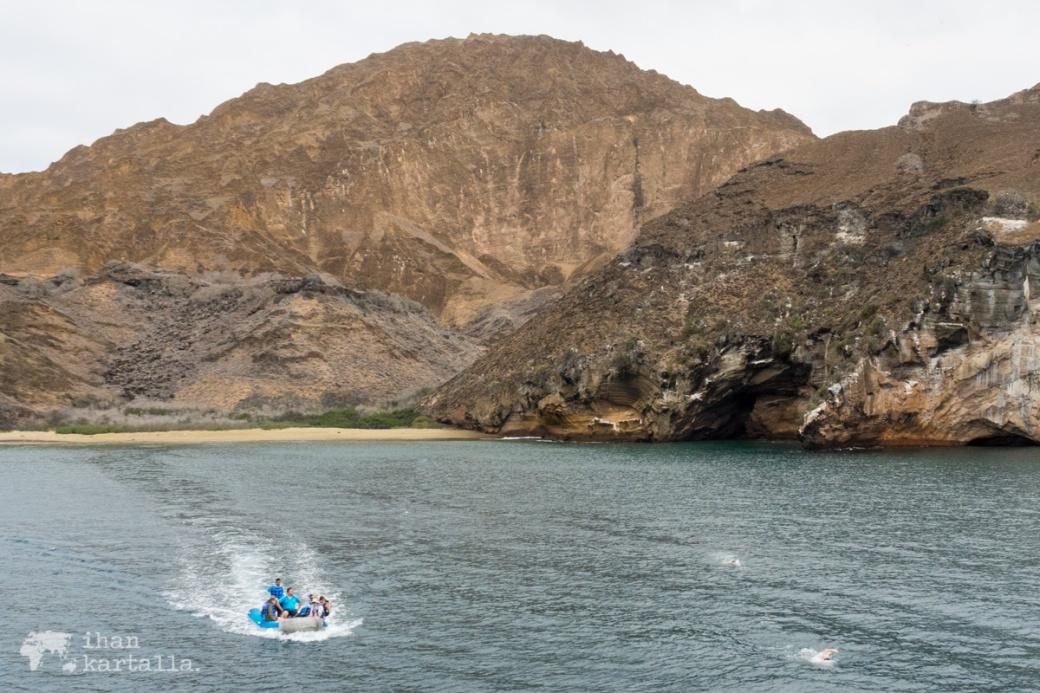 11-9-galapagos-punta-pitt-swimmers