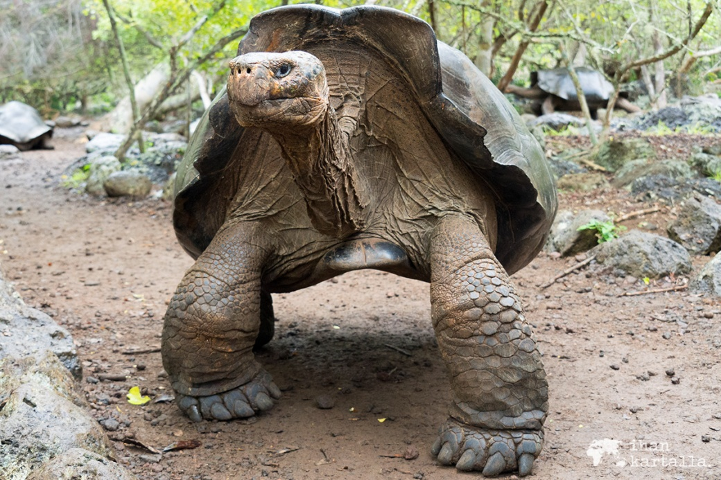 12-9-galapagos-giant-tortoise-reserve