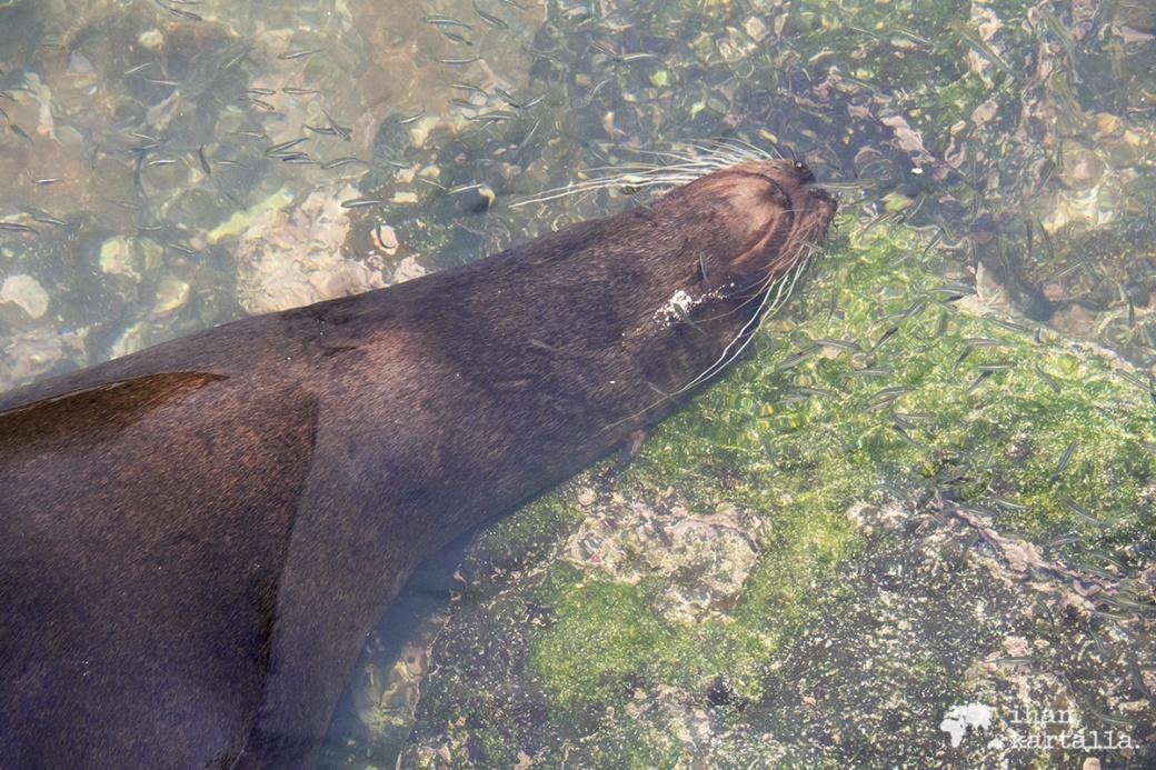 12-9-galapagos-puerto-baquerizo-moreno-sea-lion