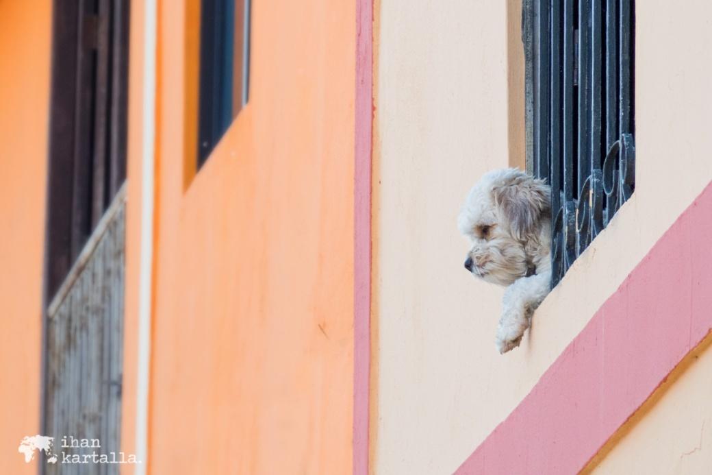 13-9-ecuador-guayaquil-cerro-santa-ana-dog