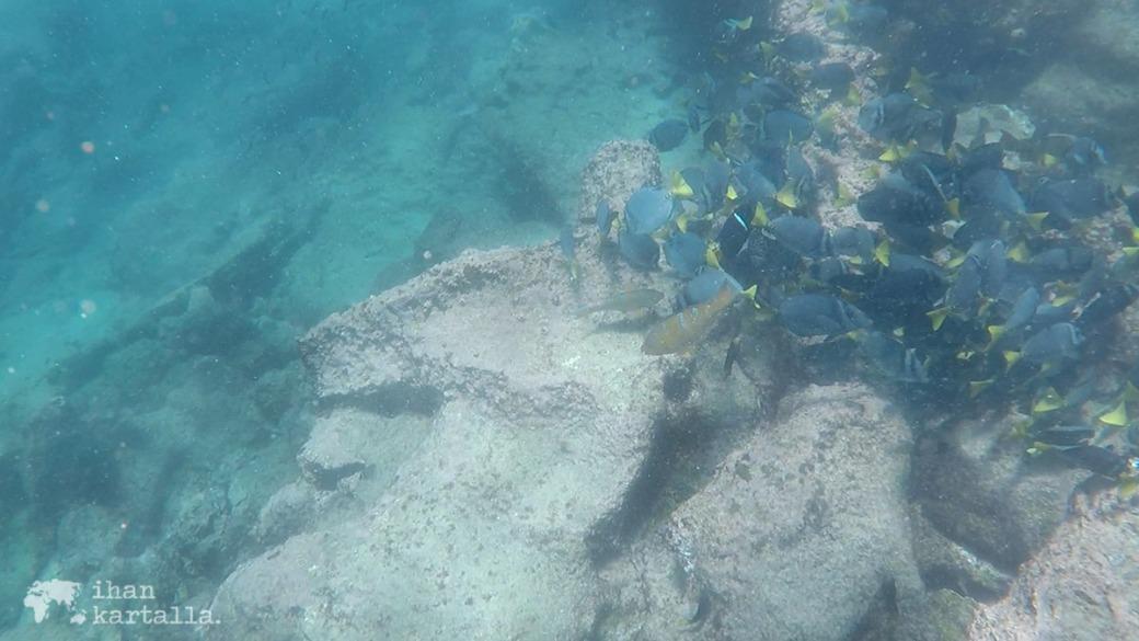 9-9-galapagos-bartolome-snorkeling