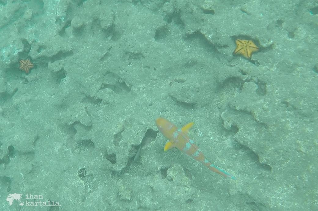 9-9-galapagos-bartolome-snorkeling2
