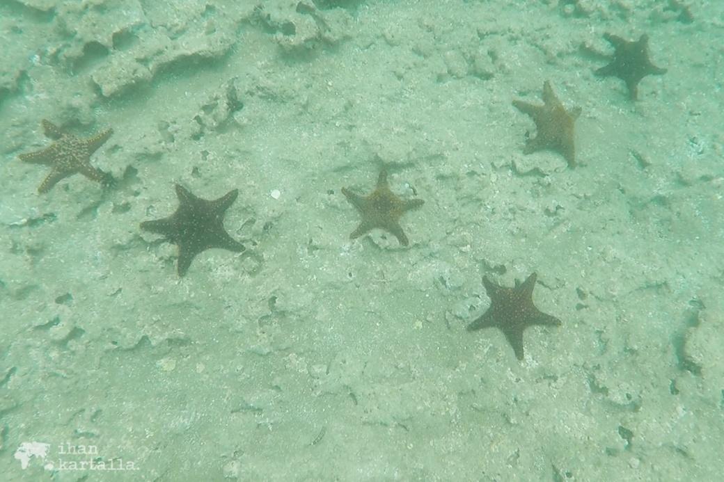 9-9-galapagos-bartolome-snorkeling3