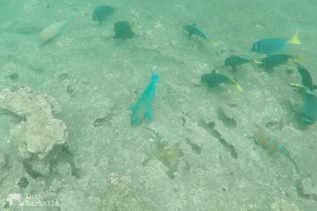 9-9-galapagos-bartolome-snorkeling4