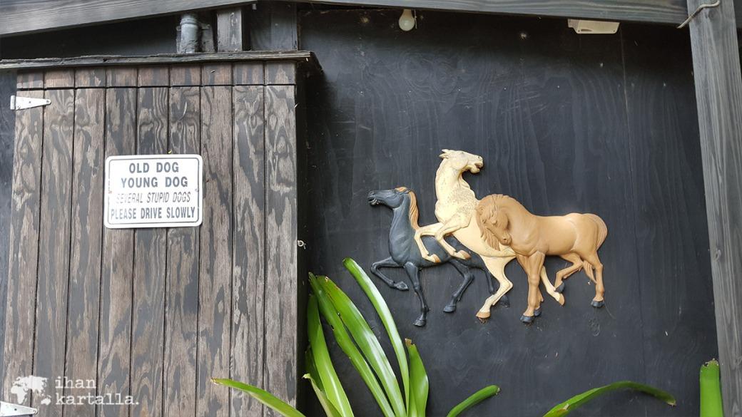3-9-bahama-ratsastus-kyltti
