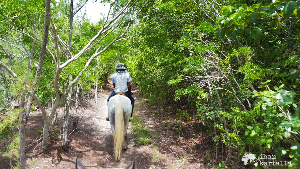 3-9-bahama-ratsastus-polku
