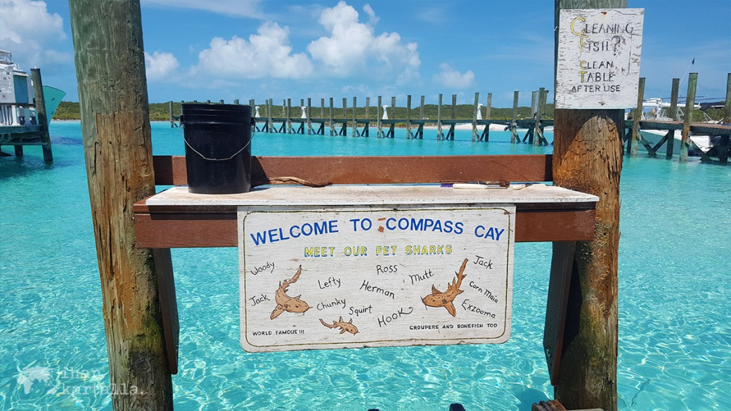 4-9-bahama-compass-cay-nurse-sharks