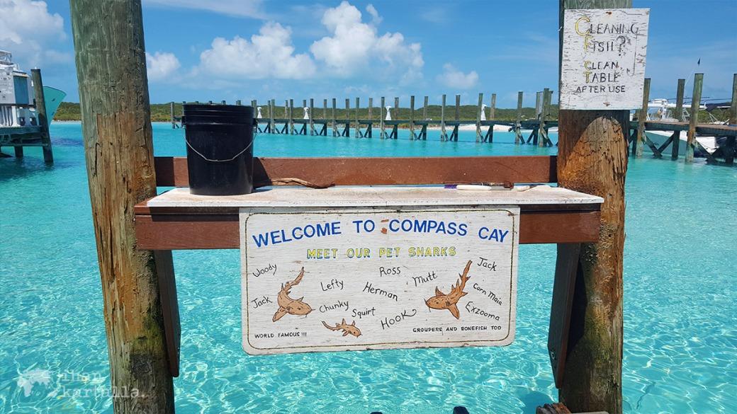 4-9-bahama-compass-cay-nurse-sharks