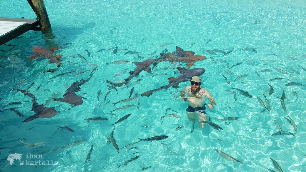 4-9-bahama-compass-cay-sharks
