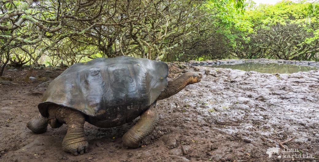 12-9-galapagos-giant-tortoise-banneri