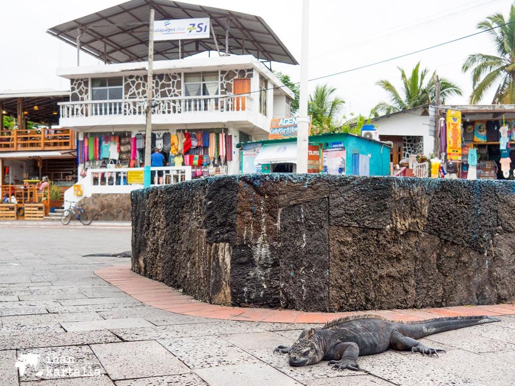 6-9-galapagos-puerto-ayora-iguana