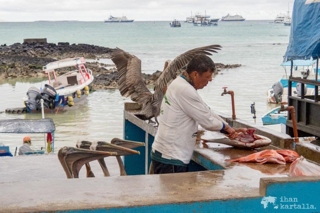 6-9-galapagos-puerto-ayora-satama