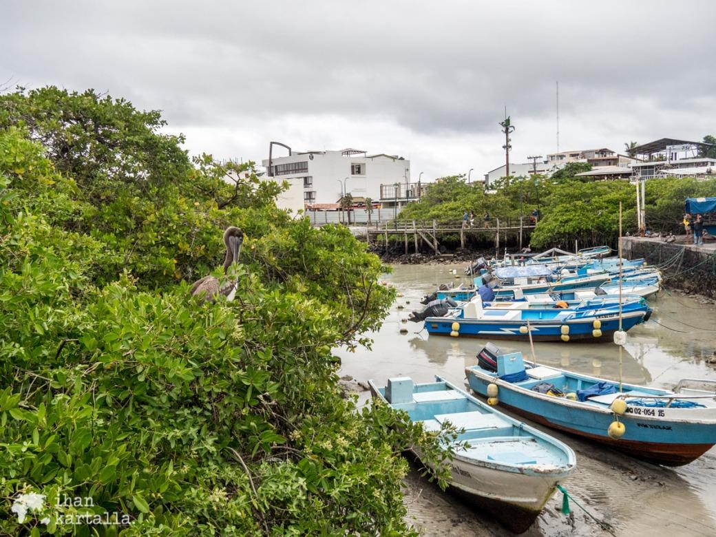 6-9-galapagos-puerto-ayora-satama2