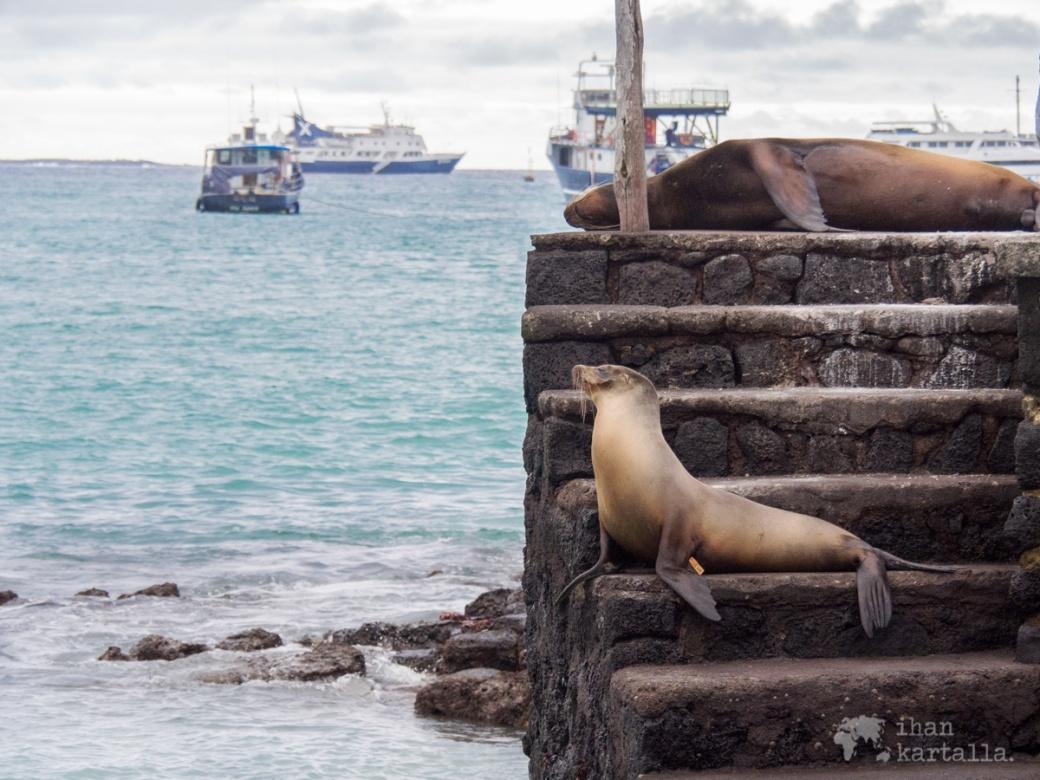 6-9-galapagos-puerto-ayora-sealions