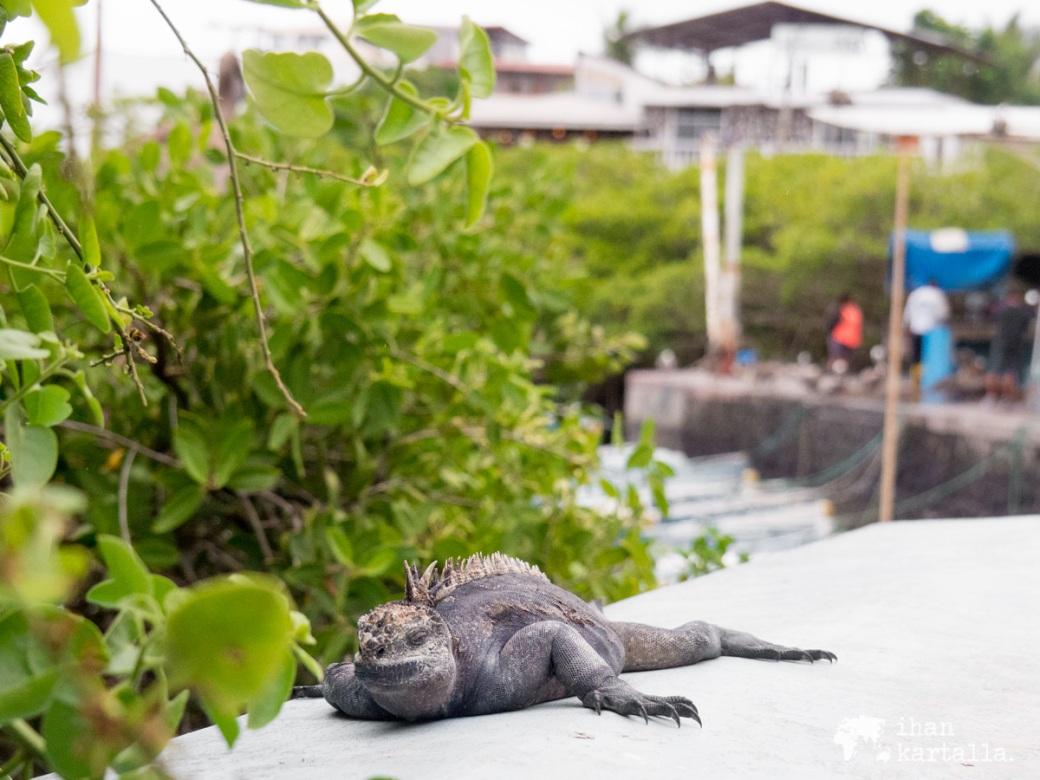 6-9-galapagos-puerto-ayora-waterfront