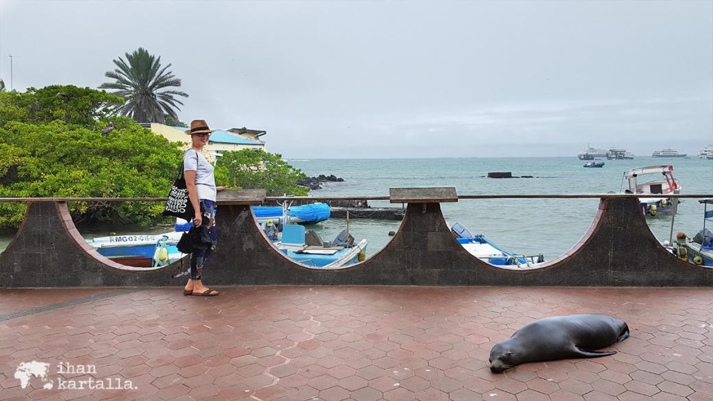 7-9-galapagos-puerto-ayora