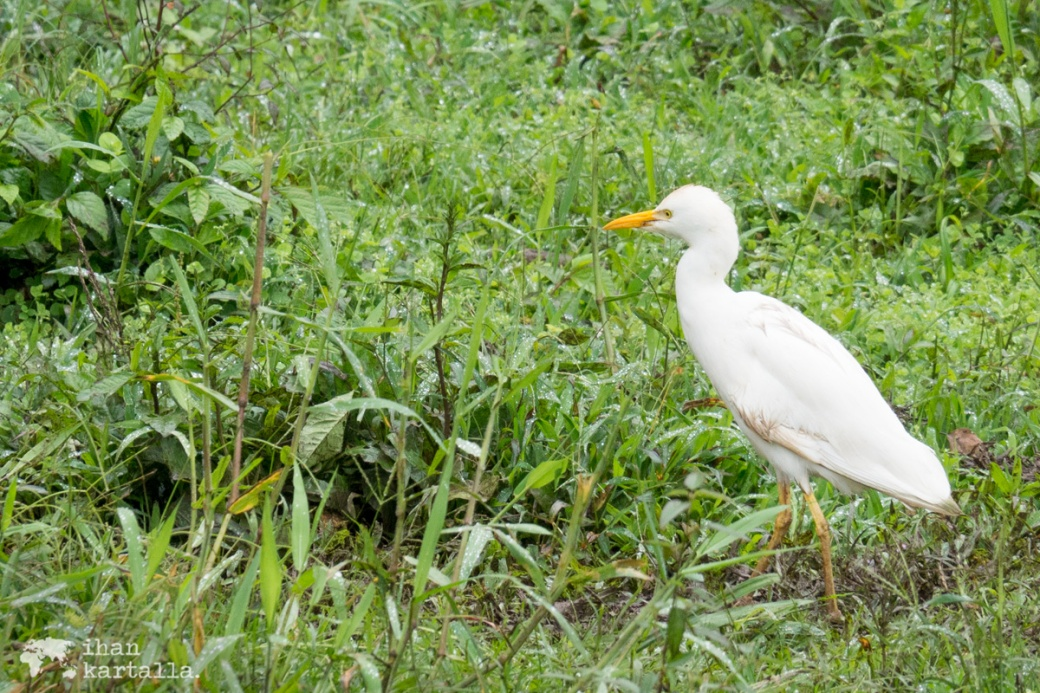 7-9-galapagos-rancho-primicias-bird