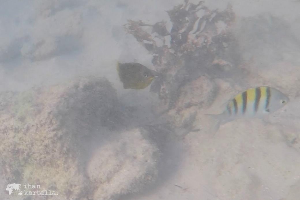 8-9-galapagos-santa-cruz-bachas-beach-snorkeling3