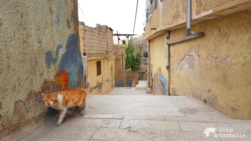 30-3-jordania-amman-cat