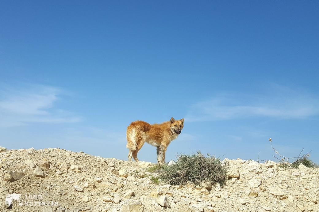 2-4-jordan-dana-shepherd