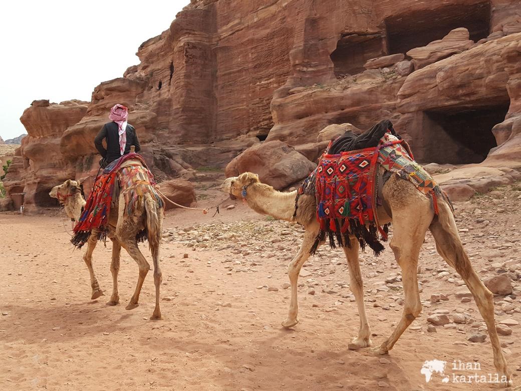 3-4-jordan-petra-camels-2