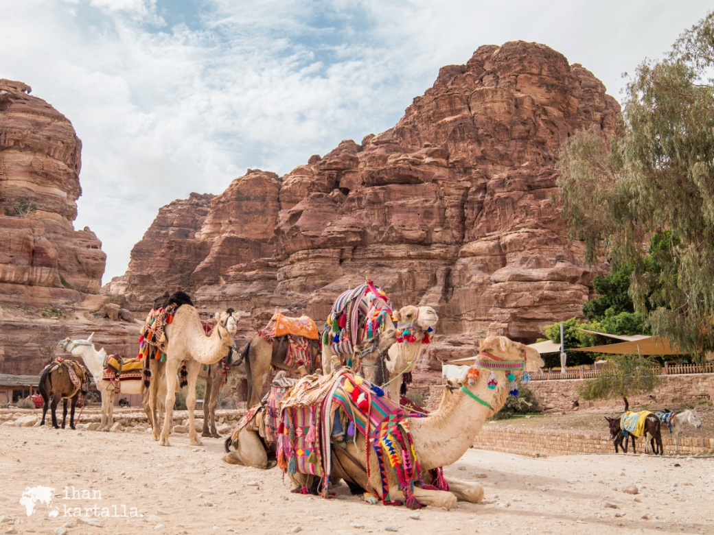 3-4-jordan-petra-camels