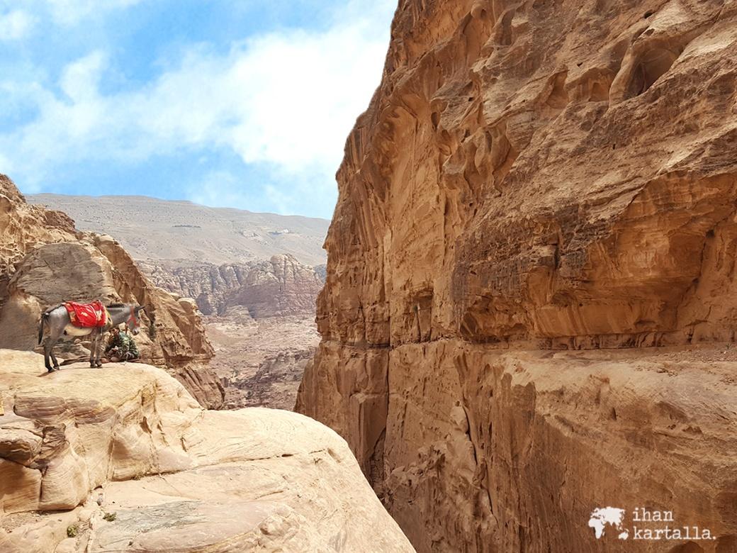 3-4-jordan-petra-donkey-view