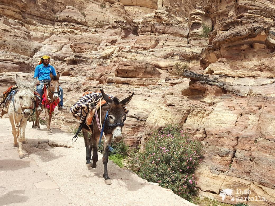 3-4-jordan-petra-donkeys