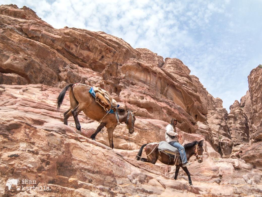 3-4-jordan-petra-horses