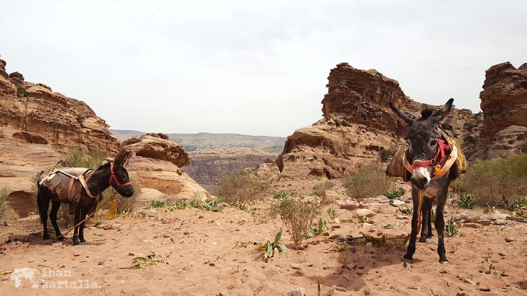 3-4-jordan-petra-monastery-donkeys