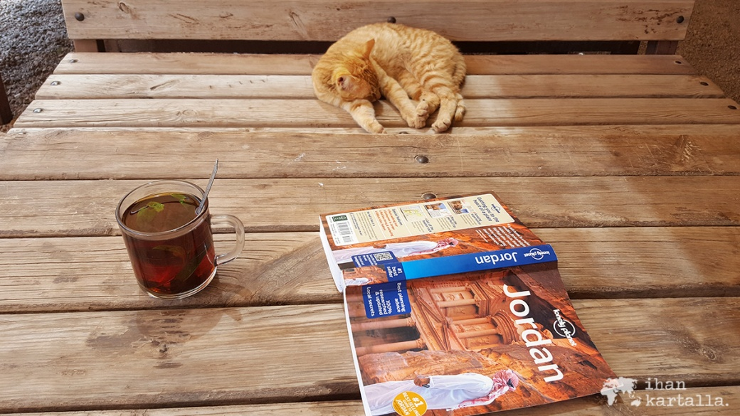 4-4-jordan-petra-cafe-cat
